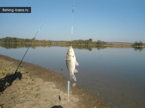 Вот такая рыба...